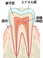 赤坂歯科クリニック 歯